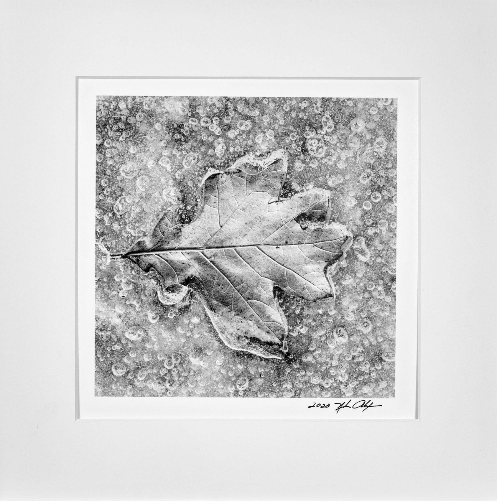 Leaf Series #3, photograph Nubar Alexanian
