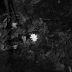 Leaf Series #7