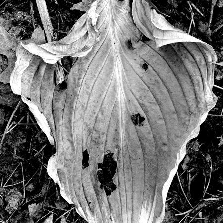 Leaf Series #9